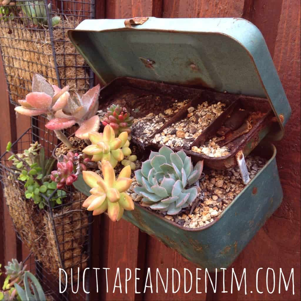 Vintage tackle box used as a planter for succulents | DuctTapeAndDenim.com