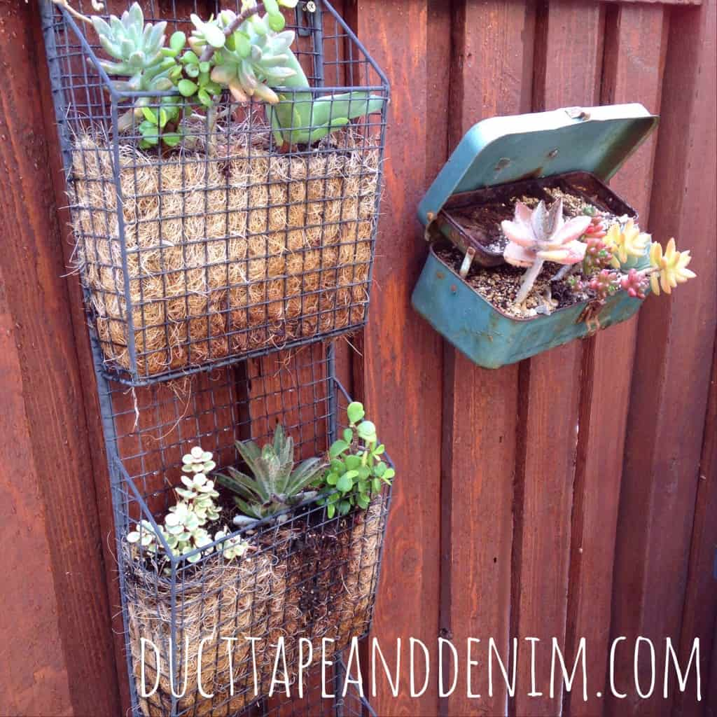 Magazine rack turned into a planter for succulents. | DuctTapeAndDenim.com