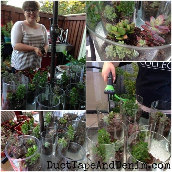 Planting the succulents for wedding centerpieces | DuctTapeAndDenim.com