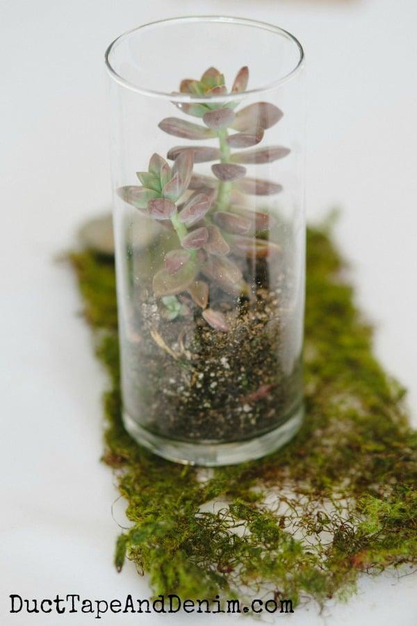 DIY wedding centerpieces with succulents | DuctTapeAndDenim.com