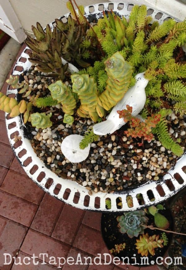 Fall succulents in birdbath ~ autumn container gardening on my patio ~ DuctTapeAndDenim.com