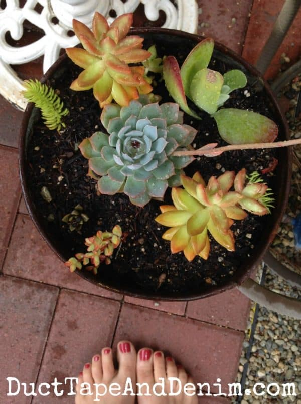 Succulents in a vintage sap bucket ~ fall autumn container gardening on my patio ~ DuctTapeAndDenim.com