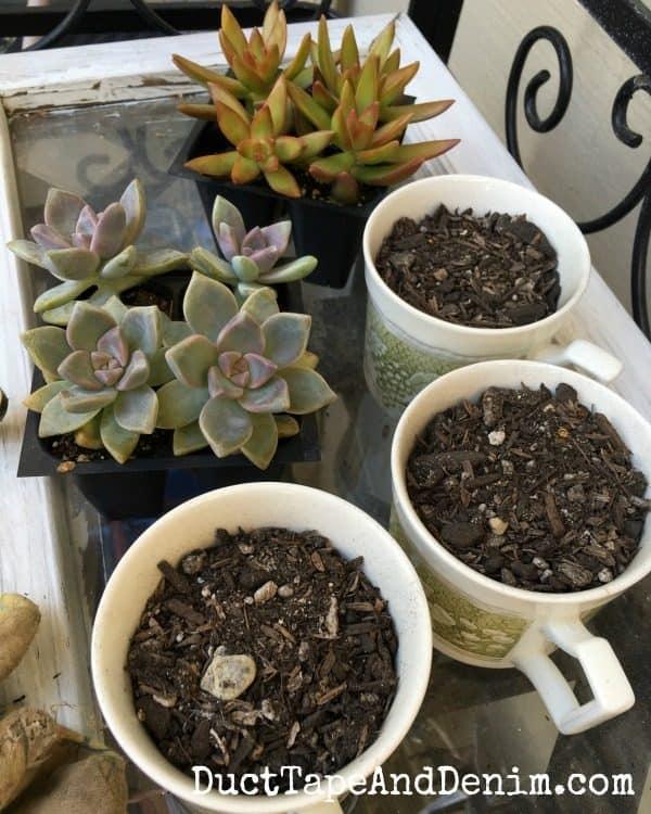 Planting succulents in vintage teacups | DuctTapeAndDenim.com