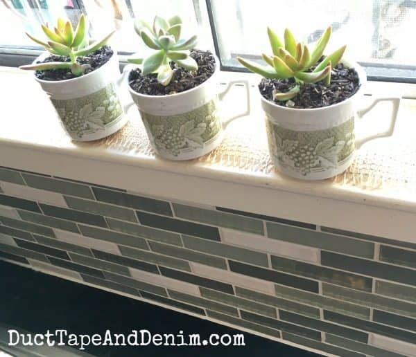 Vintage tea cups with succulents in my kitchen | DuctTapeAndDenim.com