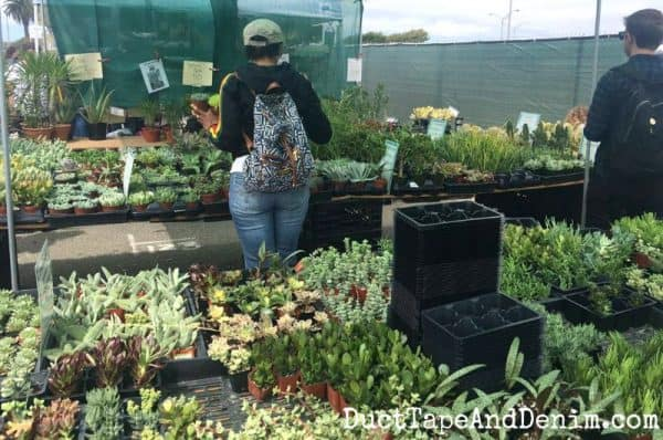 Buying succulents at Treasure Island Flea in San Francisco | Duct Tape and Denim blog | DuctTapeAndDenim.com