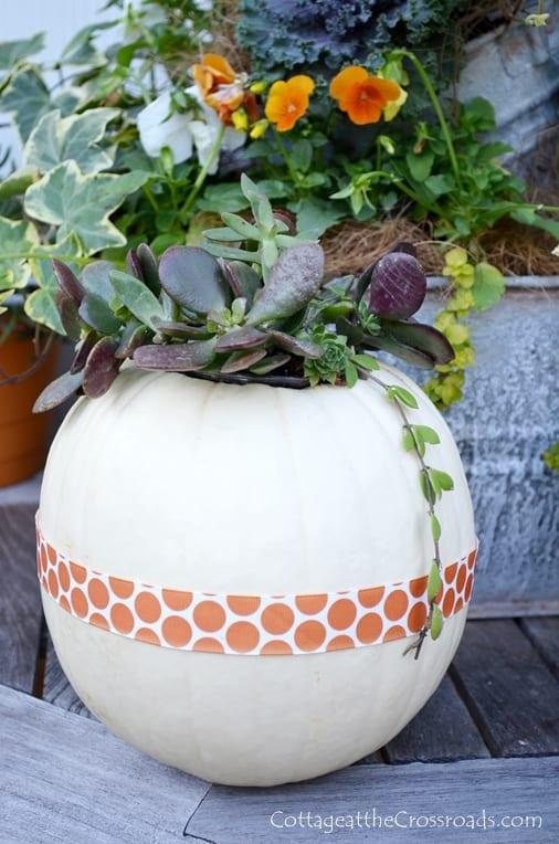 Pumpkin-Succulent-Centerpiece