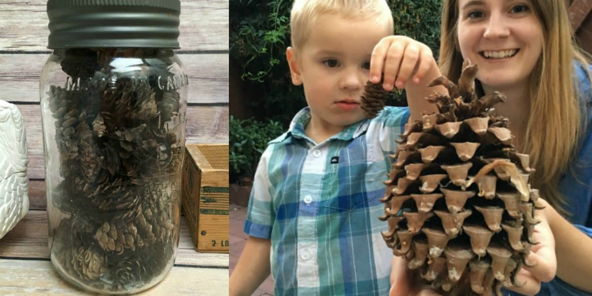Pine Cone Mason Jars, Leo's First DIY Video, & LOTS More Pine Cone Craft Projects!