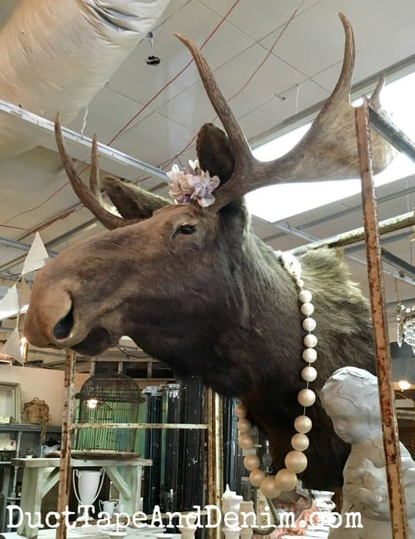 Found a moose at Tumbleweed and Company | DuctTapeAndDenim.com