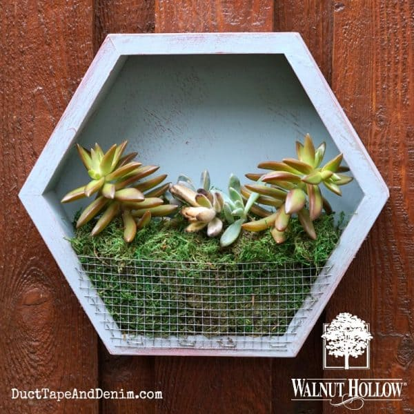 Hexagon succulent planter for my small patio | DuctTapeAndDenim.com