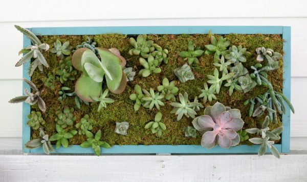 Vertical Succulent Garden and more DIY planters on DuctTapeAndDenim.com