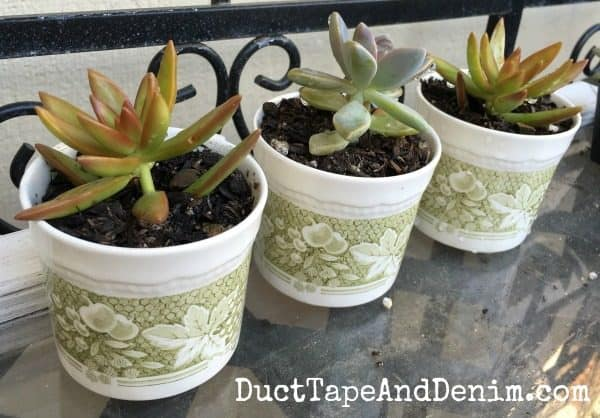 Vintage Teacup Planters. More succulent planter ideas on DuctTapeAndDenim.com