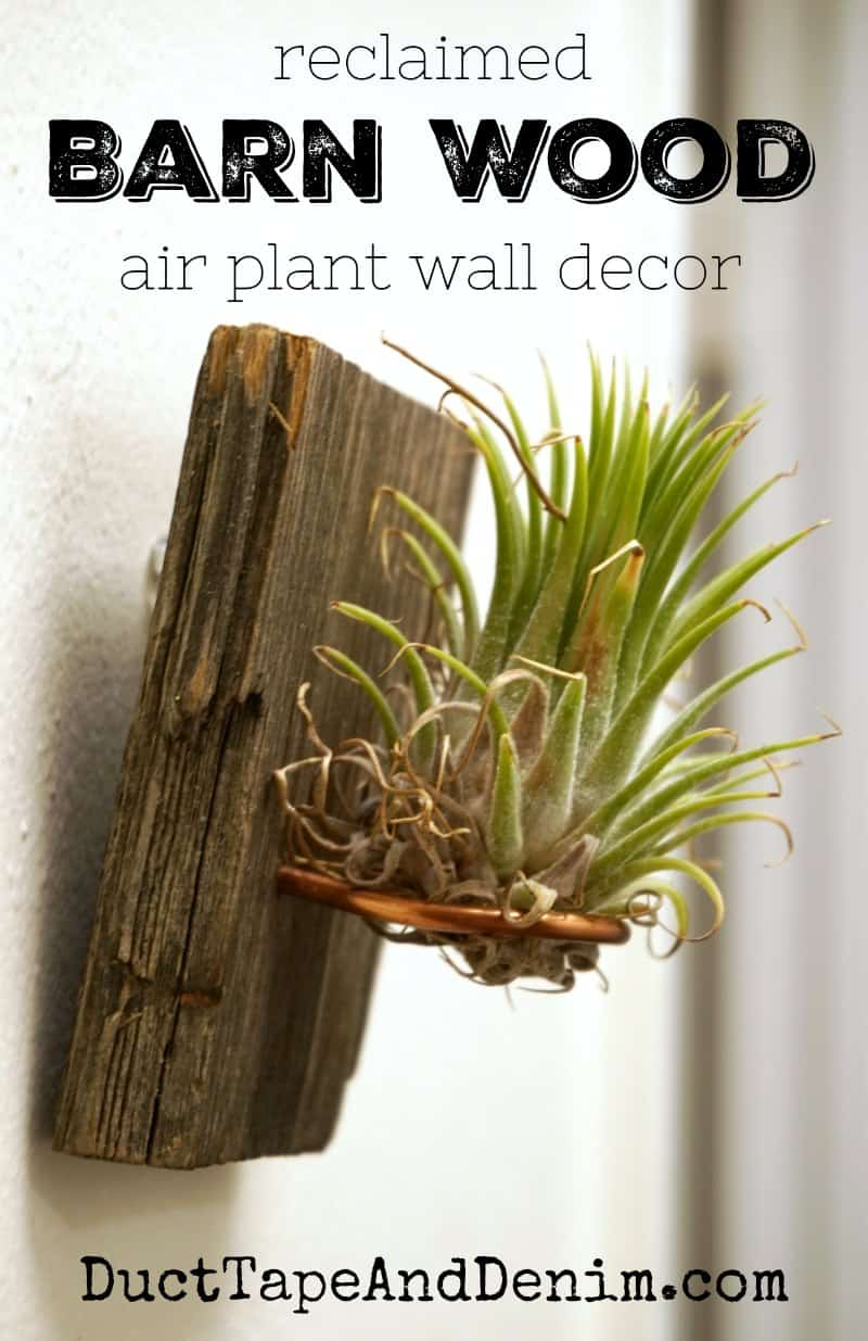 Reclaimed barn wood air plant wall decor with copper wire | DuctTapeAndDenim.com