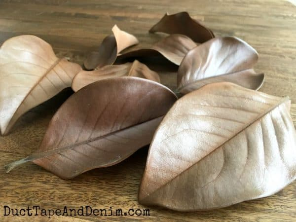 Magnolia leaves for fall crafting | DuctTapeAndDenim.com
