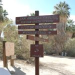 Coachella Valley Preserve, Thousand Palm Oasis in the Desert