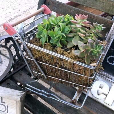 Ideas for Vintage Succulent Planters, Seen on Our Trip to Antique Trove