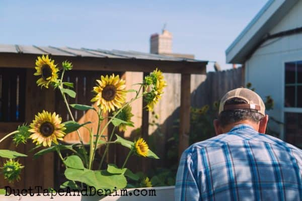 Sunflowers in Magnolia Market garden | DuctTapeAndDenim.com
