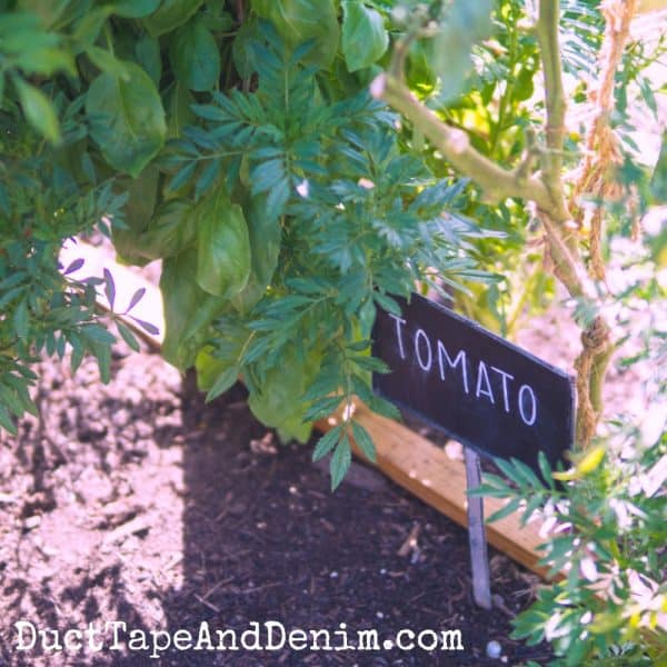 tomato plants in the garden at Magnolia Market | DuctTapeAndDenim.com